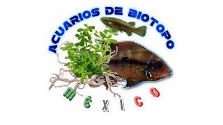 """Visitando la granja de peces ornamentales """"Calypso"""""""
