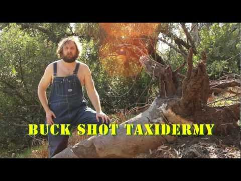 No Questions Asked Taxidermy