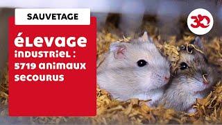 Sauvetage exceptionnel : 5719 animaux secourus par la Fondation 30 Millions d'Amis