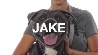 Adopt Jake at NKLA