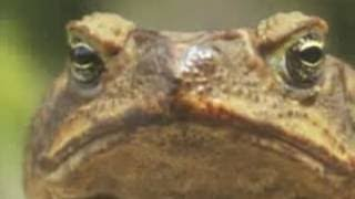 Life Science: Fish and Amphibians