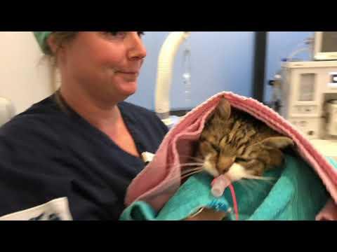 Malin hjälper hemlösa katter till ett nytt, bättre liv