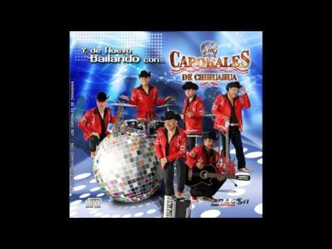 Los Caporales De Chihuahua - La Vecina 2013