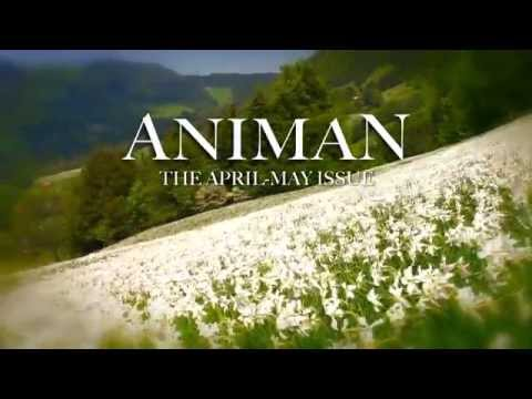 Animan Magazine April-May issue Narcisses teaser