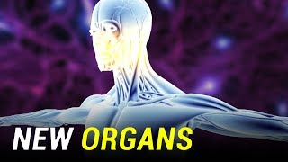Newly Categorized Organs in the Human Body
