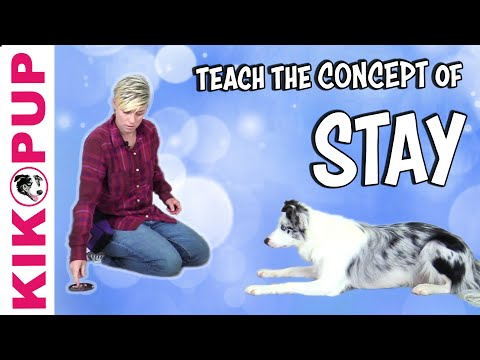 Game to Teach the CONCEPT of STAY - Dog Training