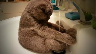 Crazy Cats 😹😹 Funny Cats Love To Play Water (Full) [Funny Pets]