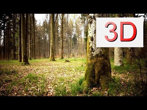Ultra HD 3D Film: MARCH FOREST WALK (4K Resolution)