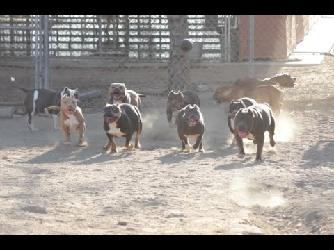 Every day is National Dog day at The Bully Market
