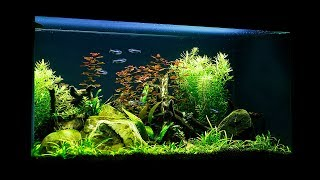 Non-CO2 Budget Aquascape - Maintenance and Update