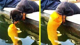 Hilarious Photos Of Dogs Acting Weird 「 funny photos 」