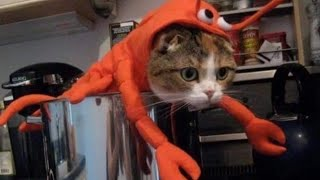 You have NEVER SEEN ANIMALS THAT FUNNY before! - CLICK & LAUGH!
