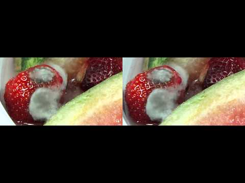 Rotting Melons decay Time Lapse 3D Full HD fast and reverse version multiview
