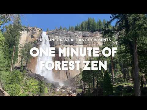 One Minute of Forest Zen – Yosemite