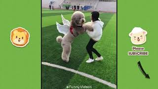 Funny Videos   Funny & Cute Cats and Dogs, Funny Pet Animals Video #3