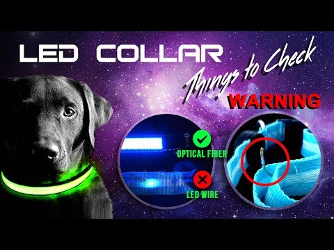 Tech Tails LED Dog Collar Review