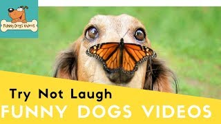 Funniest & Cutiest Dogs Reactions, Bloopers & Fails | Funny Dogs Videos Compilation #14