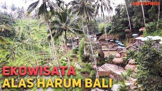 Ekowisata Alas Harum Bali, Dari Sajian Kopi Luwak Hingga Swing Super Ekstrem