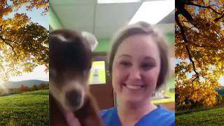 Try Not To Laugh Watching Funny Animal Fails Compilation February 2019 #1 - Co Vines✔