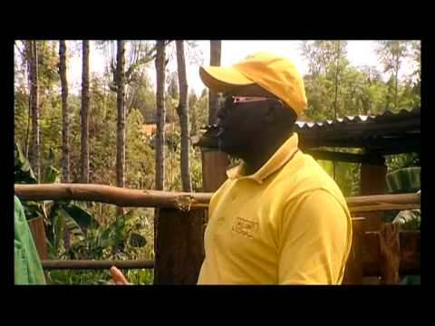 Shamba Shape Up (English) - Cows, Sorghum, Trees, Farmer's Markets