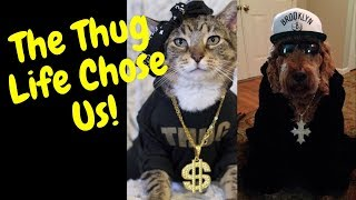 Cats and Dogs Can Be Gangster Funny cat and dog video Animals Being Animals Series