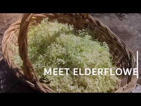 Meet Elderflower
