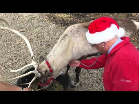 Being president of the American Veterinary Medical Association carries many responsibilities, but perhaps the most important and exciting is serving as Official Veterinarian of the North Pole. In this video, AVMA President Dr. Joe Kinnarney examines Santa's reindeer and explains what goes into his pre-flight inspection.
