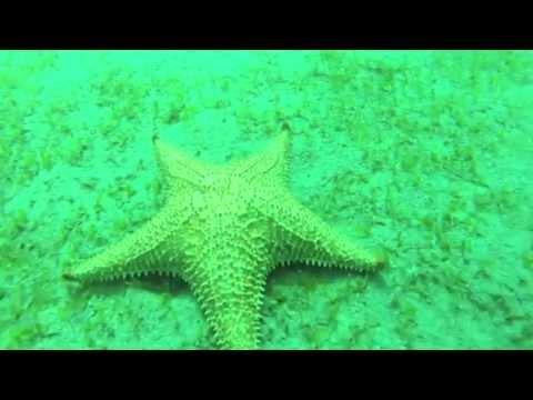 Inmersion solitaria … Espejismos submarinos …