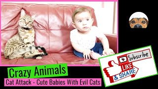 Crazy Cat Attack - Cute Babies With Evil Cats