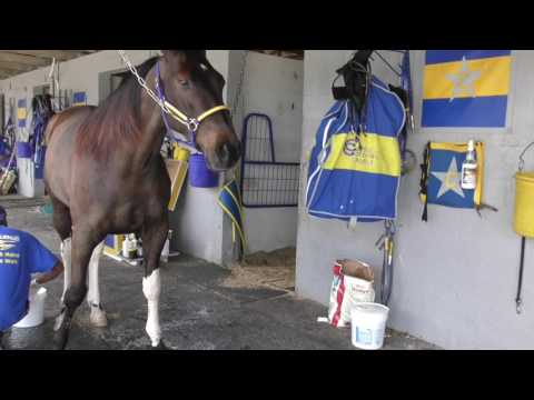 Tack to Track presented by Jacks - How to apply poultice to legs after training