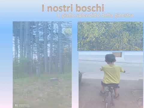 Progetto BiciScuola 2020 classe II