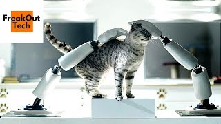 5 Cool Cat Inventions You Must See