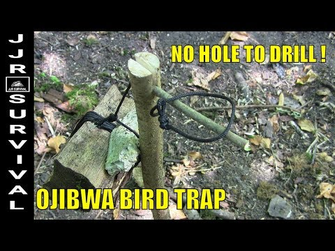 OJIBWA BIRD TRAP WITHOUT DRILLING A HOLE