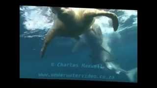 ウミガメを食べる