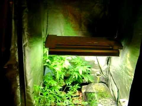 vegetative videos. Black Bedroom Furniture Sets. Home Design Ideas