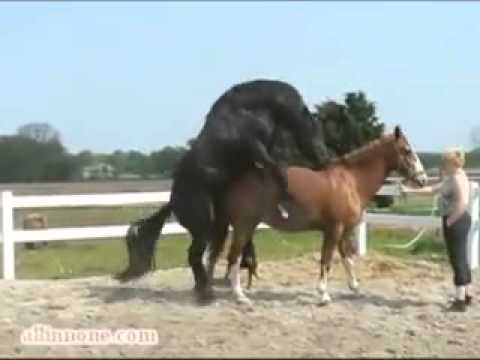 Pin Youtube-horse-mating on Pinterest