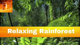 Calming Rain Forest Sounds   Perfect for Sleeping, Reading, Studying & doing Homework