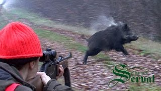 Wild Boar Hunting in Croatia - part 6, Kroatische Keiler 3 - Drückjagd, Shasse au sanglier