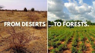 Ecosia's planting sites in Lilengo (Burkina Faso)
