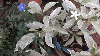 My plants... Garden tour Part1