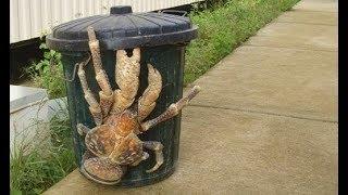 BIGGEST Sea Monsters Ever