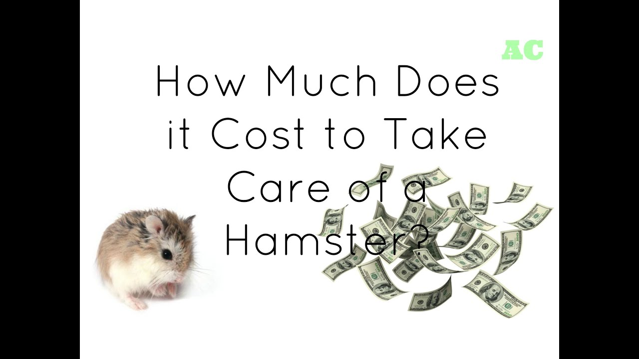 how much do i charge for a wedding cake how much does it cost to take care of a hamster 15461