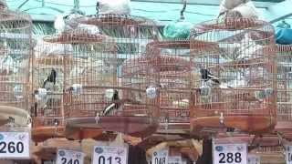 Thi choe than hot Tan Van 19.10.14 ( Thi choè than hót Tân Vạn, Đồng Nai)