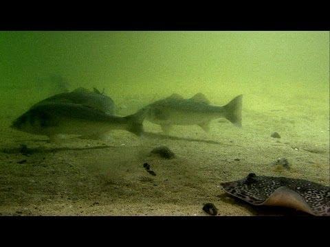 Морской твистер