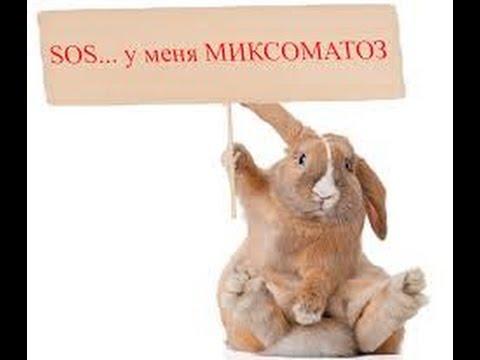 Кролики прививки вк - 71dc6