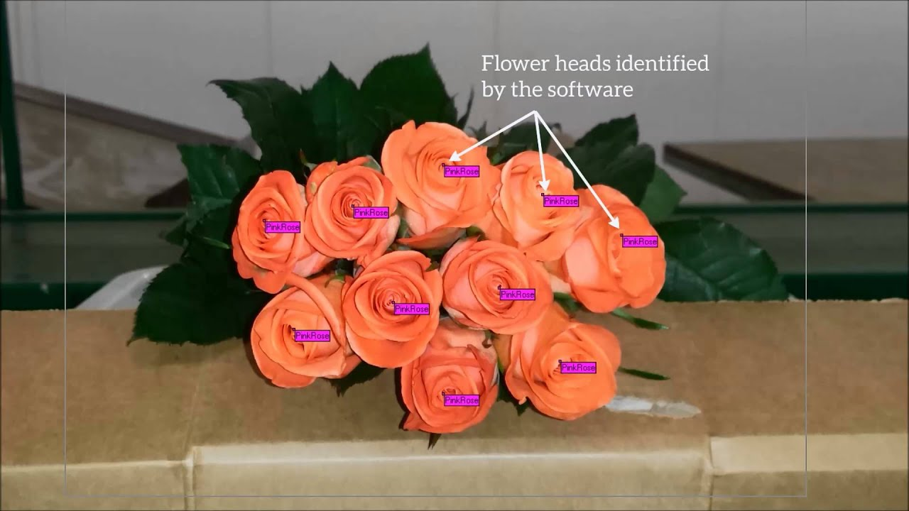 Finlays: Flower head counting system with machine vision software