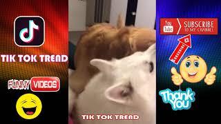 #42 Cười lăn lóc với những tình huống Lầy hài hước Tik Tok   Chó mèo và tình cảm dành cho nhau Funny
