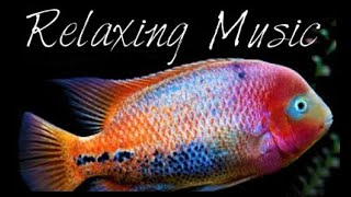 Relaxing Calming Peaceful Sleep Music Background Music With Live Tropical Fish Video