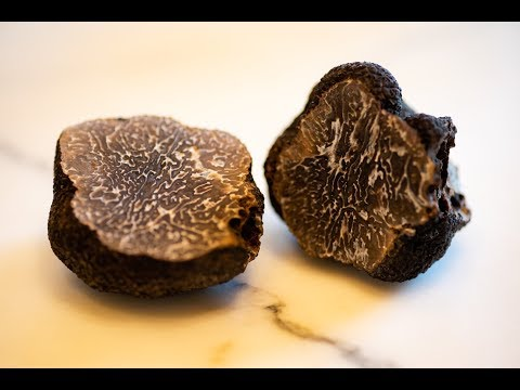 American Truffle Company Harvests First Scientifically Cultivated European Black Truffle in America