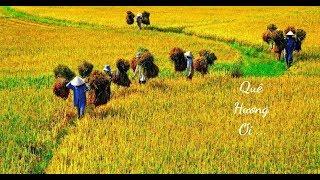 Bí thư tỉnh ủy - Mai Hoa ( OST Bí thư tỉnh ủy )